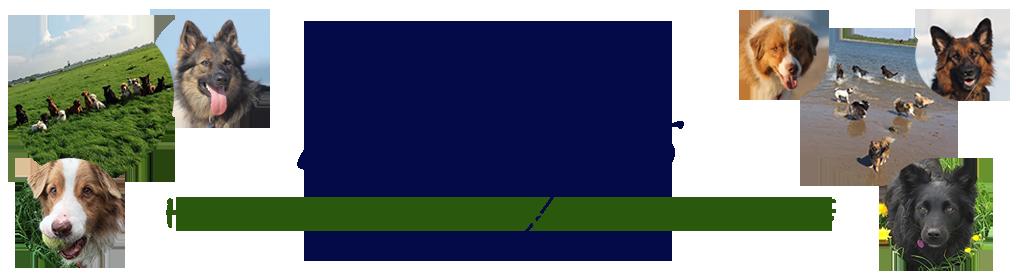 Paddy's hondenuitlaatservice