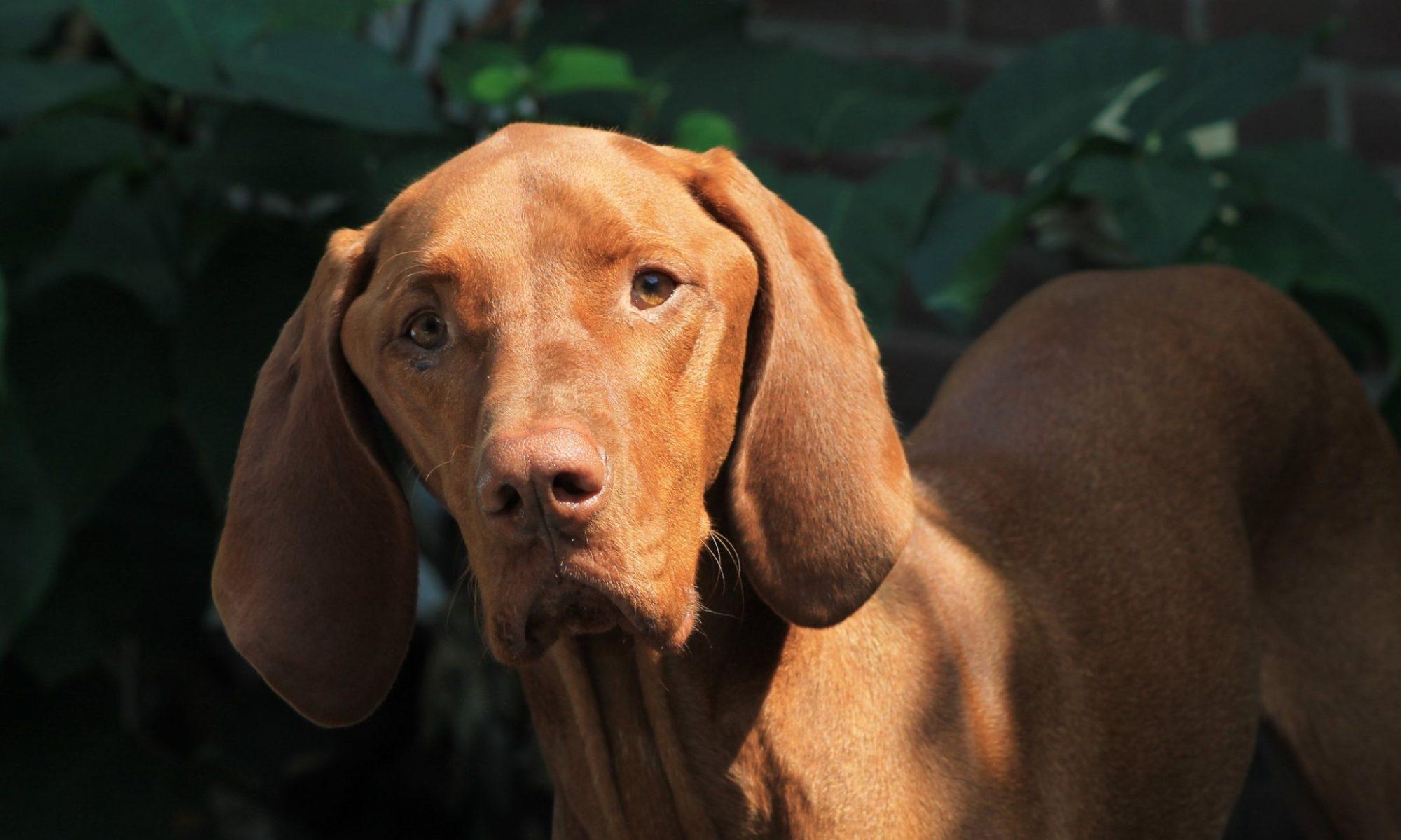 Paddy's honden-uitlaatservice